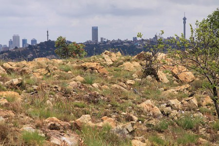 grassy ridge overlooking JHb city