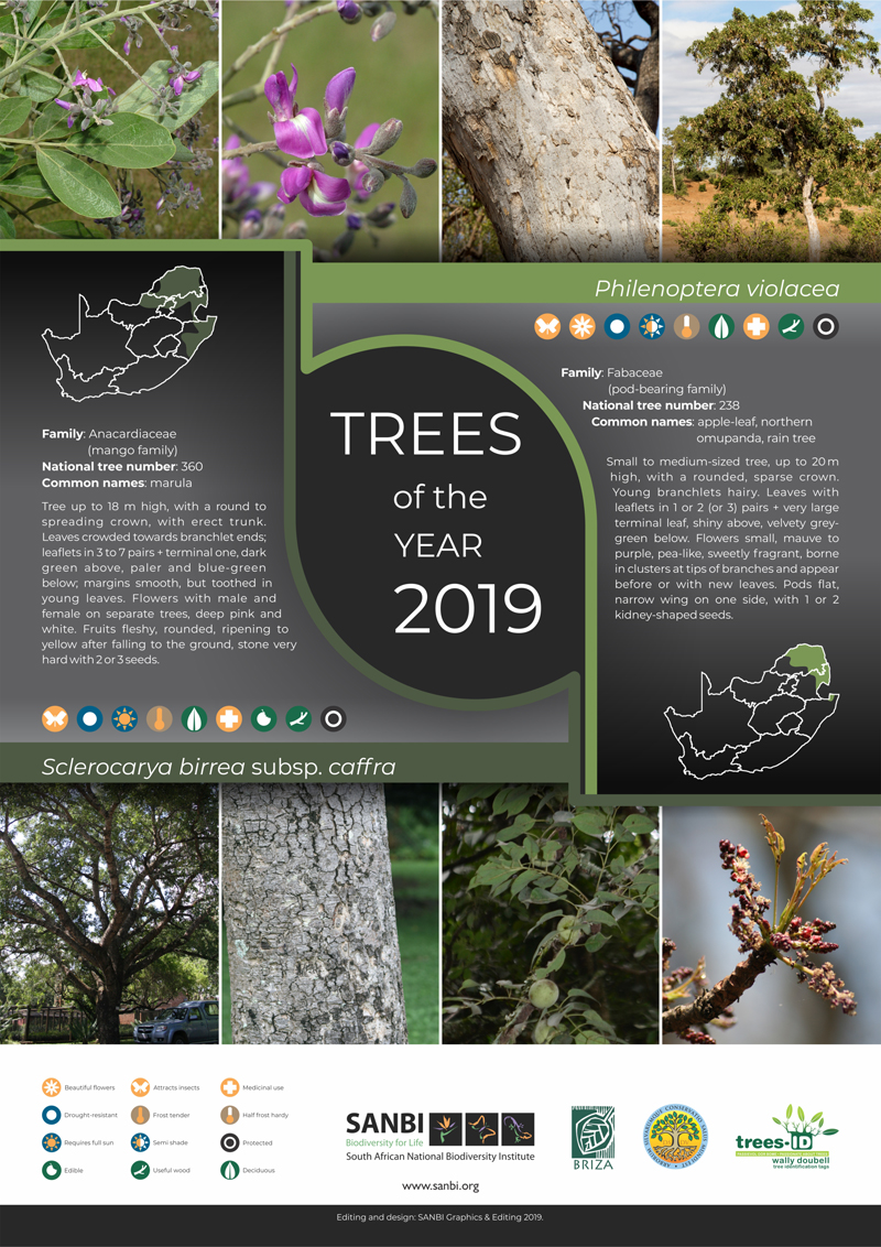 2019_Trees_of_the_year